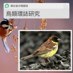 跟住雀仔周圍鴴(08)- 鳥類環誌研究